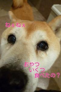 ブログ用11