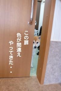 ブログ用5